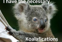 ♥My collectables♥ / I have been collecting Koalas since my Junior year of High School. / by Kimberly Williamson