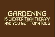 Gardening tips / by Christine Oubre