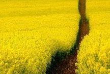 Yellow Love - Sunshine!!! / by Rebekah Bennett