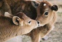 Animals / by Linda Webb