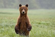 Animals  / Beautiful creatures!  / by ...