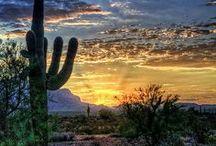 Desert / by Sadie Jaynes
