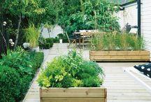 Luscious Gardens  / by Hesola
