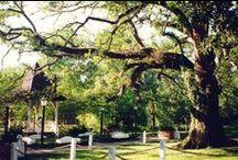 Louisiana Travel / by Louisiana Cookin'