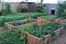 Gardening / by Green Desert