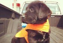 Future puppy / My cuddle buddy, furry friend  / by Chelsey Rae