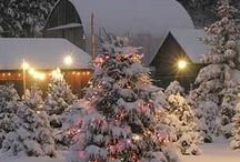 Winter Wonderland / by JoMarie Radcliffe