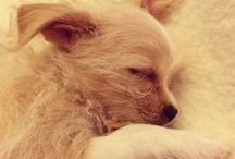 Cutesy Animals / by Tina Tsai (Oh Snap! Let's Eat!)