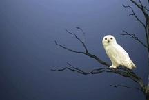 Owls I Love / by Maya