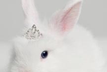 rabbit / by ปัญจะ ศิระโรจน์