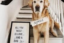 dog / by Meghan McCoy