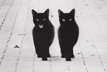 Animals / by Kim Leethal