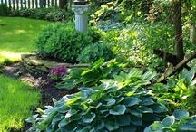 Gardening / by Mary Ruf