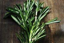 Herblore / by Kim Leethal