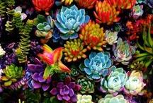 Flowers n' Gardening / by Amanda Kelley
