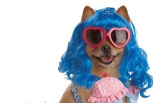 Pet Costumes  / Dressed up in your favorite costume to enjoy? Then why leave your pet? PartyBell brings interesting pet costumes  for every event that will turn around the heads and givin your pet the limelight of party. Happy Shopping Pet Lovers!  / by PartyBell.com-Online Costumes and Party Supplies Store