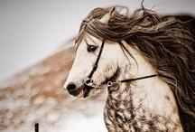 Animals / by Shea McHugh