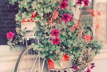 Gardening / by Mary Ann Gilchrist