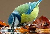 Birds / by Susan Siemens
