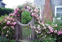 Garden/Yard / by Nikki Richer