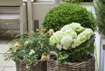 Garden Love / by Rachel Bonness Design