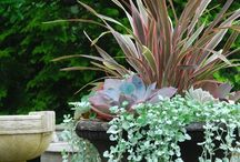 Outdoor Inspiration / by Luci @Bungalow Home Staging & Redesign