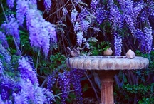 Wisteria / by The Enchanted Muse