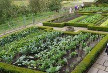garden-vegetables / by Micki Sand-Cohen