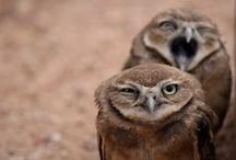 OWLS / by Kelsey VanAuken