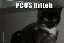 PCOS / Polycystic Ovarian Syndrome is a bear to live with. We hope these resources make your life and disease management easier. / by Creating a Family