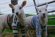 Knit & Crochet / by Lisa H