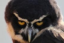 Love my Owls / by Dawn Day-Iannelli