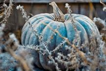 Gardening / by Kathy Shifflet