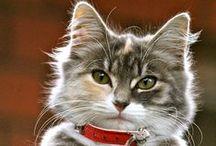 Feline Frenzy / by Kristi Carpluk