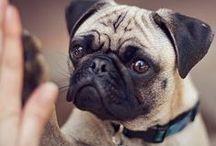 Pets & Cute Animals / by Jill Kirkpatrick Bounds