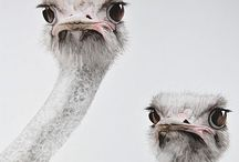 Critters:: Awwww / by Theresa Grushkin