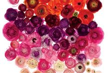 Flowers / by Alicia Palma-Espinoza