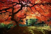 Gorgeous Gardens / by Pamela Lies