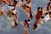 Animalia / by Cheryl Hopper