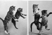 Cats / by Rosaspina Vintage