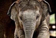 ELEPHANTS / by Kim Spencer