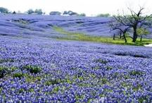 Texas / by Susan Skinner