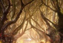 *Beautiful Nature-Forest--- / by Shun Watashima