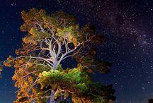 *Beautiful Nature-Night view--- / by Shun Watashima