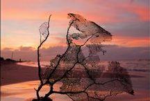 *Beautiful Nature-Silence--- / by Shun Watashima