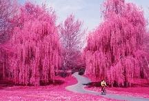 Pink ... I love Pink / by Elizabeth Ham