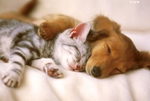 Animal Magnetism >^..^<  / My love for animals and their cuteness... / by Kimberly Torchia