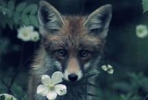 ** love animals / by Un Aqua