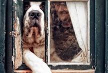 Puppy Love / by Brandi Moore