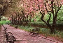Springtime in Central Park  / by Central Park Conservancy